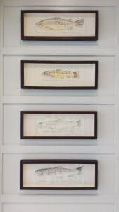 Rectangular framed fish hung in wood panelled alcoves in Surrey.